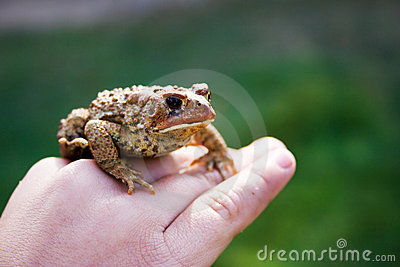 żaby ręka