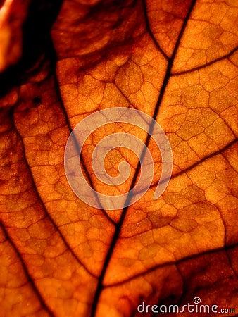 żyły liści,