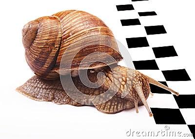 蜗牛帽子编织图片