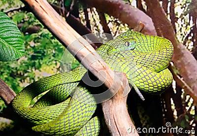 面蛇怎么捏步骤图解