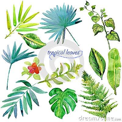 套绿色热带水彩叶子和植物 您的设计的水彩花卉集合.图片