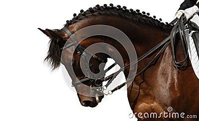 άλογο κόλπων