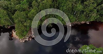 Άποψη αέρα ενός ποταμού στη ζούγκλα του Αμαζονίου απόθεμα βίντεο