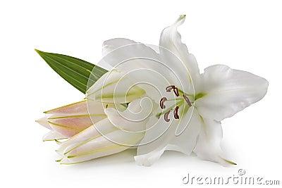 Άσπρα λουλούδια κρίνων