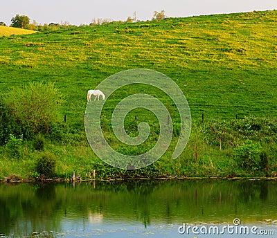 Άσπρο άλογο