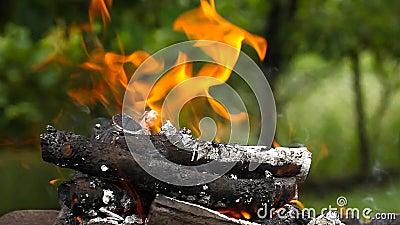 Έγκαυμα κούτσουρων με μια φωτεινή φλόγα φιλμ μικρού μήκους