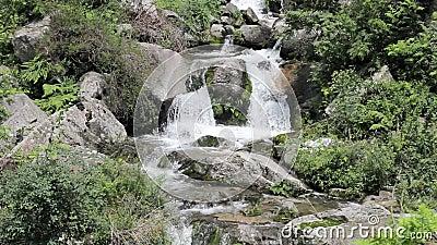 Ένας κολπίσκος στους βράχους στο δάσος απόθεμα βίντεο