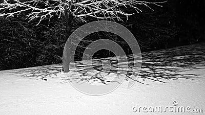 Ένα μικρό κομμάτι, οικογένεια Sorididae, ένα ποντίκι ή χαφιές σαν θηλαστικό, εμφανίζεται σε νέο χιόνι τη νύχτα κατά τη διάρκεια χ απόθεμα βίντεο