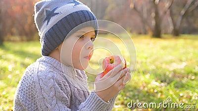 Ένα παιδί στο φθινοπωρινό πάρκο σε πικ-νικ Τρώει ένα ζουμερό κόκκινο Apple Κλείσιμο προσώπου φιλμ μικρού μήκους
