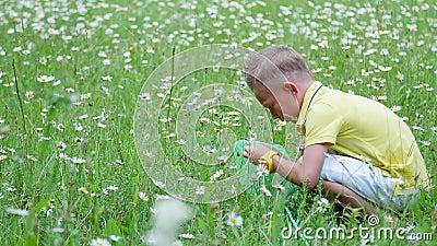 Ένα παιδί, ένα αγόρι, κάθεται στη χλόη, μεταξύ των μαργαριτών, και εξετάζει καθαρό του, έντομα Καλοκαίρι, υπαίθρια, στο δάσος φιλμ μικρού μήκους