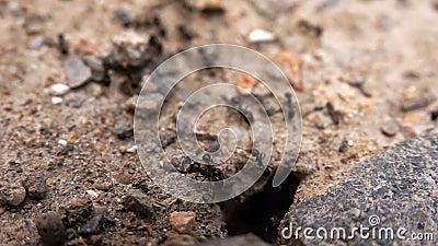 Έντομα στο έδαφος φιλμ μικρού μήκους