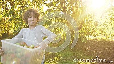 Έφηβος παίρνει κόκκινα μήλα στον κήπο με μήλα Συγκομιδή φρούτων Φθινοπωρινός τρόπος ζωής φιλμ μικρού μήκους