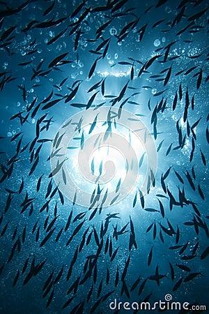 ήλιος ψαριών