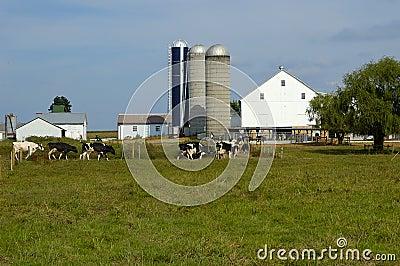 αγρόκτημα βοοειδών