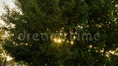 Ακτίνες ήλιου μεταξύ των φύλλων απόθεμα βίντεο