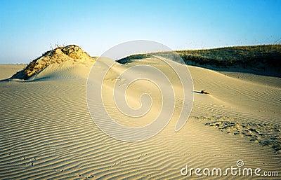 αμμόλοφοι