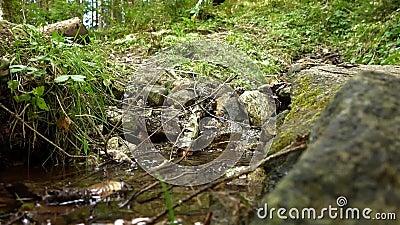 Ανατροφοδοτήστε τον ποταμό και το πόδι του δάσους απόθεμα βίντεο