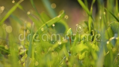 Ανοιξιάτικο πράσινο γρασίδι κοντινό απόθεμα βίντεο