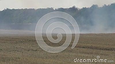 Αποκοπή πεδίων σίτου Το άχυρο καίγεται Ρύπανση της ατμόσφαιρας απόθεμα βίντεο