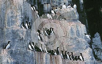 απότομοι βράχοι πουλιών