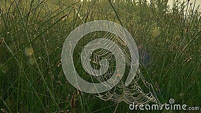 Αράχνη στον Ιστό φιλμ μικρού μήκους