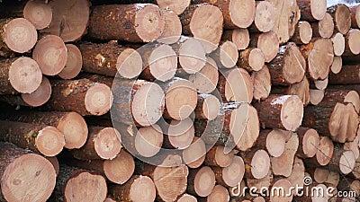 Αργό τηγάνι στην υλοτομία στο δάσος Φρεσκοκομμένα ξύλινα κορμοτεμάχια Αποθήκευση ξύλου για τη βιομηχανία Σύγχρονη δασοκομία Εξωτε απόθεμα βίντεο