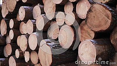 Αργό τηγάνι στην υλοτομία στο δάσος Φρεσκοκομμένα ξύλινα κορμοτεμάχια Αποθήκευση ξύλου για τη βιομηχανία Σύγχρονη δασοκομία Εξωτε φιλμ μικρού μήκους