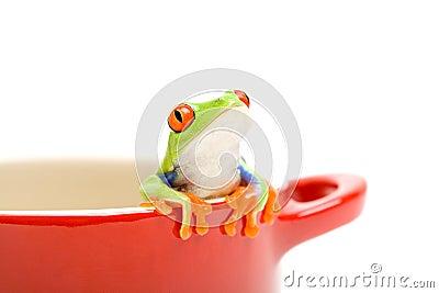 βάτραχος που φαίνεται έξω &d