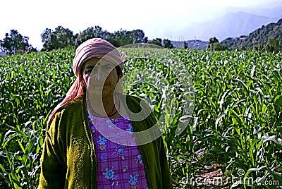 βήμα καλλιέργειας Εκδοτική Στοκ Εικόνες