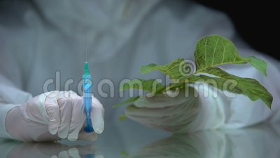 Βιολόγος που κρατά σύριγγα και φυτό, επίδραση φυτοφαρμάκων στη χλωρίδα, οικολογική δοκιμή απόθεμα βίντεο