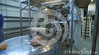 Βιομηχανία τροφίμων τσάντες των κόκκων φαγόπυρου στο μεταφορέα για να πάει συσκευασία dalnayshey και ναυτιλία στα καταστήματα απόθεμα βίντεο