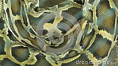 Βιρμανός ύπνος python απόθεμα βίντεο