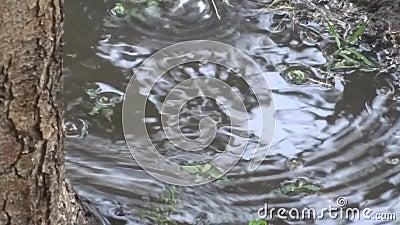 Βροχή και λακκούβες φιλμ μικρού μήκους