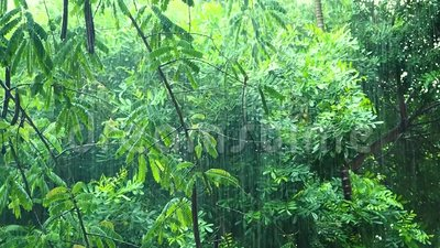 Βροχή που εμπίπτει κάτω στο τροπικό πράσινο δάσος απόθεμα βίντεο