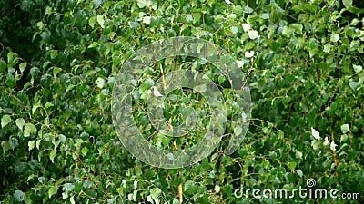 Βροχερή και παγωμένη ημέρα και φύλλα δέντρου απόθεμα βίντεο
