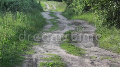 Βρώμικος δρόμος μέσω του δάσους σημύδων απόθεμα βίντεο