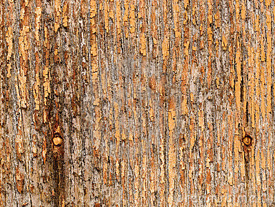 βρώμικο παλαιό δάσος σύστ&alp