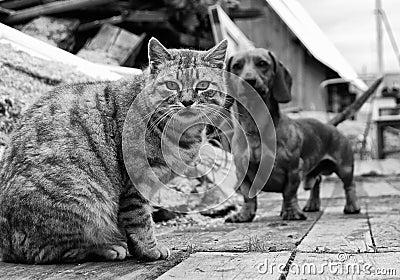 Γάτα και σκυλί
