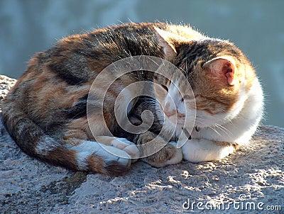 γάτα νυσταλέα