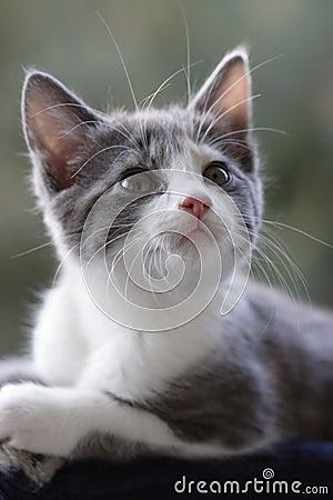 γάτα περίεργη