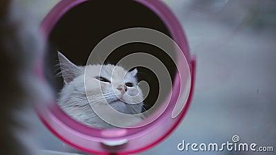 Γάτα που εξετάζει την αντανάκλαση στον καθρέφτη απόθεμα βίντεο