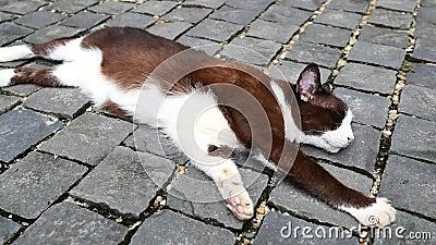 Γάτα που κοιμάται στο έδαφος φιλμ μικρού μήκους
