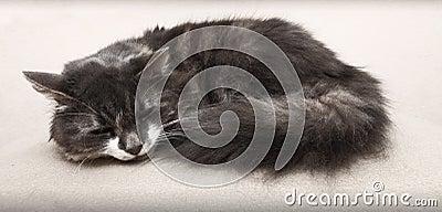 Γάτα ύπνου