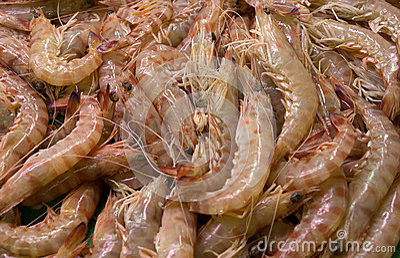 Γαρίδες