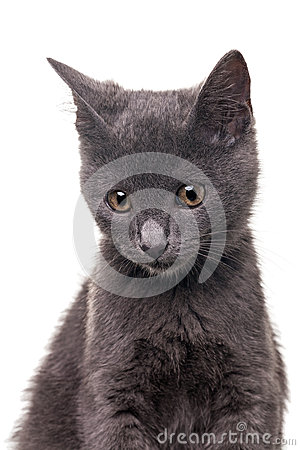 Γατάκι Chatreaux