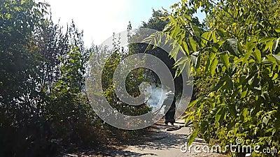 Γενναία πυρκαγιά εντοπισμού πυροσβεστικών για να αποτρέψει την αυστηρή ζημία και να σώσει τη φύση απόθεμα βίντεο