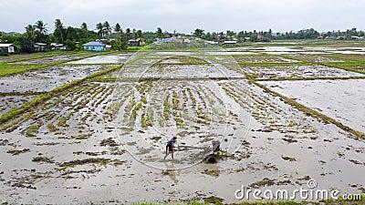Γεωργός που χρησιμοποιεί κινούμενο τρακτέρ που οργώνει σε ορυζώνες για την προετοιμασία της περιοχής για την καλλιέργεια ρυζιού φιλμ μικρού μήκους
