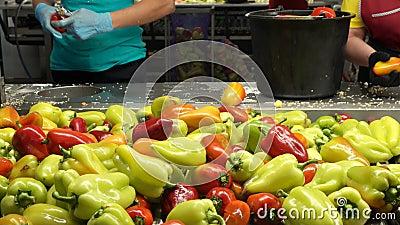 Γλυκό βουλγαρικό πιπέρι στη γραμμή επεξεργασίας απόθεμα βίντεο