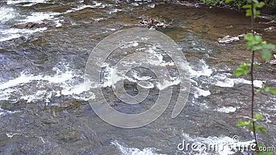 Γρήγορο ρεύμα ποταμών βουνών Ρηχός ποταμός βουνών με τα ορμητικά σημεία ποταμού πετρών απόθεμα βίντεο