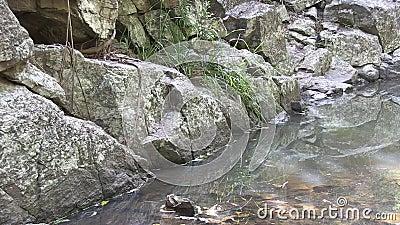 Γρανίτης, νερό, χλόη, ρίζα δέντρων φιλμ μικρού μήκους